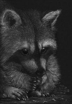 "WildLife ""A Big Thirst"" 36 X 24 Kelowna Galleries SFCA Award Art Visions 2010 People's Choice Award Art Visions 2010 ""Moonlight Swim"" Award of Excellence, & Cheetah Drawing, Raccoon Drawing, Black Paper Drawing, Black And White Drawing, Chalk Drawings, Animal Drawings, Ink Illustrations, Illustration Art, Scratchboard Art"