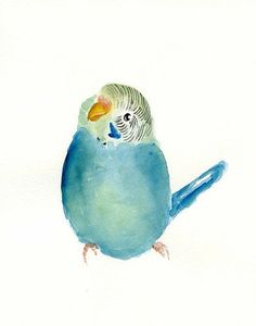 I once had a budgie like this... his name was Bluey and I loved him, but he died eventually