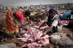 gadhimai festival nepal photos animals sacrifice goddess hindu