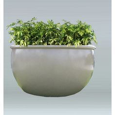 "Allied Molded Products Orlando Round Pot Planter Size: 18"" H x 24"" W x 24"" D, Color: Pure White"
