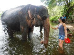 Elephant´s World en Kanchanburi Thailand, Elephant, World, Pura Vida, Thailand Travel, Elephants, Animales, The World