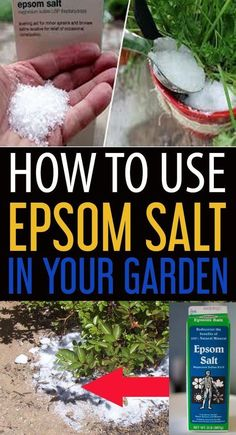 Growing Vegetables Today we are going to discuss about some expert prescribed ways of adding Epsom salt to your daily gardening routine for boosting up plant growth. Organic Gardening, Gardening Tips, Gardening Supplies, Balcony Gardening, Urban Gardening, Gardening Gloves, Indoor Gardening, Epsom Salt For Plants, Epsom Salt In Garden