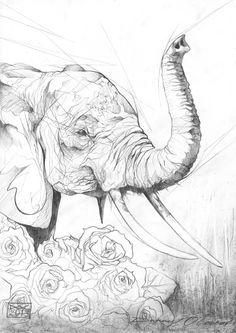 Elephant drawings | by Doc on flicker
