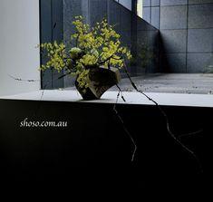 Arrangement by Melbourne-based Ikebana artist & teacher Shoso Shimbo