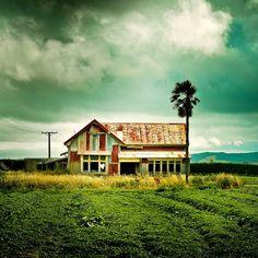 New Zealand / Farm / Landscape