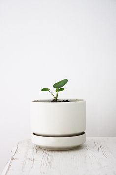 IMG_4369 Plant Pots, Potted Plants, Planters, Dots, Stripes, Detail, Interior, Green, Blog