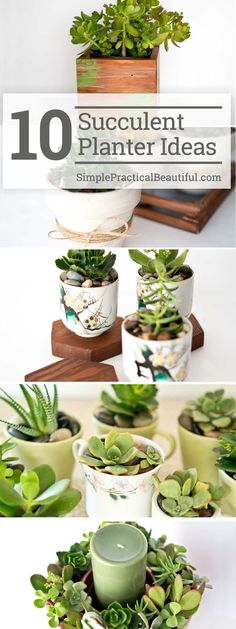 Succulent Planter Ideas How to make your own DIY succulent planter Ten succulent gift ideas Succulents in containers as home decorHow to make your own DIY succulent pla. Succulent Planter Diy, Succulent Gifts, Succulent Bouquet, Planting Succulents, Planter Pots, Planter Ideas, Succulent Plants, Growing Succulents, Terranium Ideas