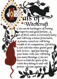 Witchy Cats on Halloween