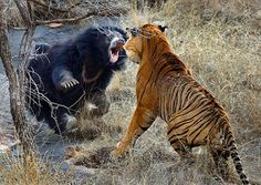 Top 10 Photographs of Animals Fighting Animals
