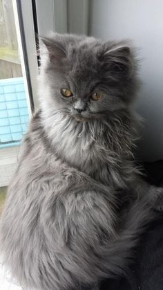 Hello from Boo the fluff monster. Sent in by Craig Driver-Gray: