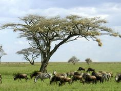 12 Days Tanzania Safari tour to visit Lake Manyara National Park, Serengeti National Park, Ngorongoro Crater, and Zanzibar Island Beach.