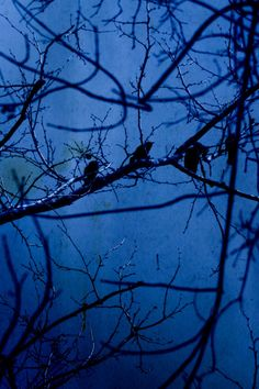 Blue Luna Blue Bath, Abstract, Artwork, Summary, Work Of Art, Auguste Rodin Artwork, Artworks, Illustrators