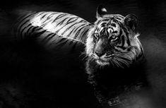 http://www.fubiz.net/2015/04/07/black-and-white-animal-portraits/