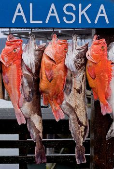 In Seward Alaska, the orange ones are Rockfish and yes, they're ugly but, they are the best tasting too!