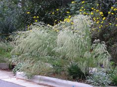 more grasses