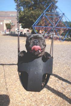 So sieht ein glücklicher Hund aus! Wie süß ist bitte das breite Grinsen dieser Französischen Bulldogge? #pet #dog #frenchbulldog