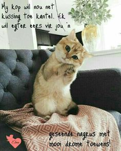 Good Night Sleep Tight, Goeie Nag, Afrikaans Quotes, Bible Prayers, Special Quotes, Cute Quotes, Funny Pictures, Funny Pics, Animals