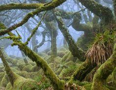 Dartmoor Schön und geheimnisvoll!