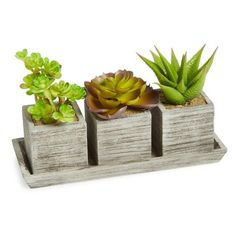 ALLSTATE Succulent Tray ($19) ❤ liked on Polyvore featuring home, home decor, small item storage, green, modern home accessories, green home decor, modern tray and modern home decor