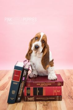 pink ribbon puppies » thank Dog. photography
