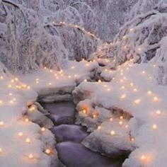 white backdrop & fairy lights