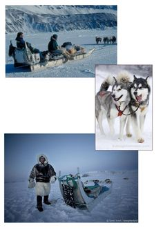 eskimo sleigh Polar Animals, Continents, Alaska, Mount Everest, Preschool, Explore, Mountains, Education, Travel