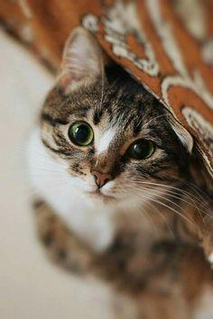 The depth of a feline stare < 3 I #MarvelousMeowMeows