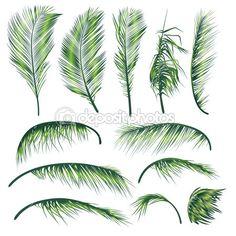 Palm Tree Leaves. http://depositphotos.com/12404585/stock-illustration-Palm-Tree-Leaves.html