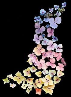 """""""urone: edieelee: Stardust Hydrangea. Photo by Ken Smith, flowers, hydrangea uploaded by Eeyore (via imgTumble) """""""