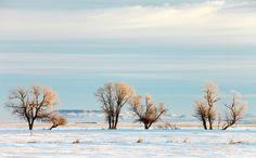 Desperate Trees by Todd Klassy on Flickr.