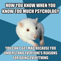 "[Picture: Background: 6 piece pie style color split with dark teal blue, and sky blue alternating. Foreground: A white lab rat with two visible arms and red eyes. Top text: ""How you know when you know too much psychology"" Bottom text: ""You can't get mad because you understand everyone's reasons for doing everything""]"