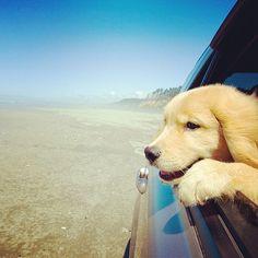 happy driving :)