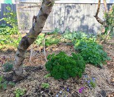 Marina's Garden Sneak Preview