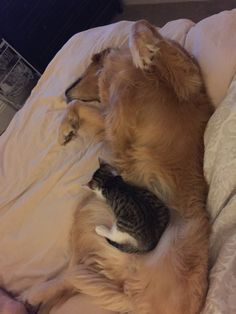 Rescued Kitten rejected by Cat Siblings Falls in Love with Family Dog! For the love of animals. Pass it on.