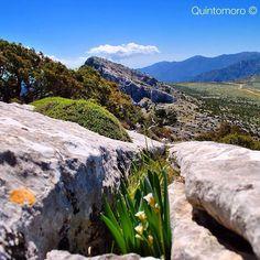by http://ift.tt/1OJSkeg - Sardegna turismo by italylandscape.com #traveloffers #holiday | #trekkingdisardegna Tra le creste di #Urzulei Da Genna Silana a Genna e Rugge la #primavera esplode prepotente tra le rocce calcaree. Siamo a 1200 metri ed il cielo è limpido e l'aria è fredda sferzata da un forte vento di #maestrale. Siamo circondati dalla natura di questa parte del #Supramonte che ci sconvolge per la sua intensa bellezza. Foto presente anche su http://ift.tt/1tOf9XD | March 24 2016…