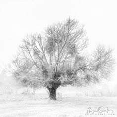 The will of Winter by Miguel-Santos.deviantart.com on @DeviantArt