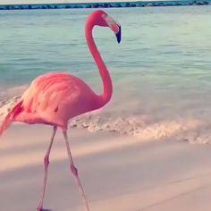 Flamingo Dancing - Barbara F.W - Flamingo Dancing Flamingo Danicnig to Maniac - Flashdance (Buying Guide) - Flamingo Wallpaper, Flamingo Art, Pink Flamingos, Flamingo Painting, Flamingo Drawings, Flamingo Photo, Funny Birds, Cute Funny Animals, Cute Baby Animals