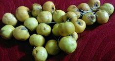 Elma Sirkesi Nasıl Yapılır | Çiftlik Hayatı Cilantro, Onion, Apple, Fruit, Vegetables, Food, Apple Fruit, Onions, Essen