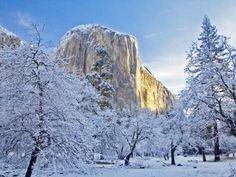 Sunrise Light Hits El Capitan Through Snowy Trees in Yosemite National Park, California, USA Photographic Print by Chuck Haney Yosemite California, California National Parks, California Dreamin', Yosemite National Park, Snow Covered Trees, Snowy Trees, Snow Pictures, Nature Pictures, Color Photography