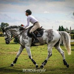 Sports Horse