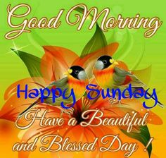 Good Morning Happy Sunday Have A Beautiful Blessed Day good morning sunday sunday quotes good morning quotes happy sunday sunday quote happy sunday quotes good morning sunday