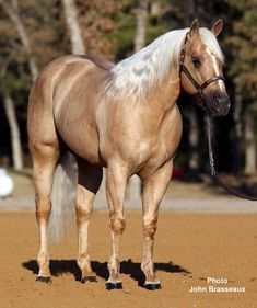 Palomino, All The Pretty Horses, Beautiful Horses, Animals Beautiful, Barrel Racing Horses, Barrel Horse, Cebu, American Quarter Horse, Quarter Horses