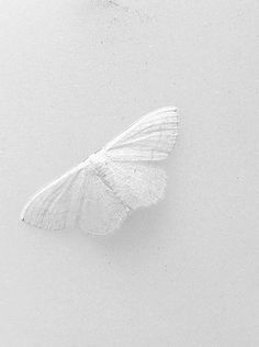 A white butterfly on a white background. It's just so minimalistic yet aesthetic Rainbow Aesthetic, Aesthetic Colors, Aesthetic Pictures, Angel Aesthetic, Black And White Aesthetic, All White, Pure White, Cream White, White Art
