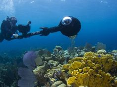 Massive expansion of ocean survey to study impact of climate change on coral reefs