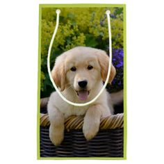 #funny - #Golden Retriever Baby Dog Puppy Funny Pet Photo -- Small Gift Bag