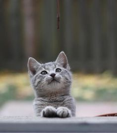Patient anticipation cute cat