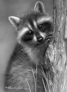 Raccoon Drawing, Raccoon Art, Racoon, Raccoon Tattoo, Animal Sketches, Animal Drawings, Art Drawings, Drawing Animals, Baby Animals