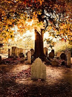 I love ❤️ these beautiful yellow orange leaves 🍁 for this beautiful back ground scene but I hate these ugly old tombstones in this cemetary Cemetery Statues, Cemetery Headstones, Old Cemeteries, Cemetery Art, Graveyards, Cemetery Dance, Cemetery Angels, Angel Statues, Spooky Places