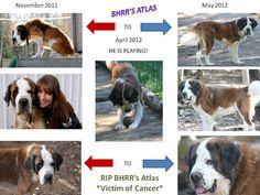 Atlas' Journey! #inspiring