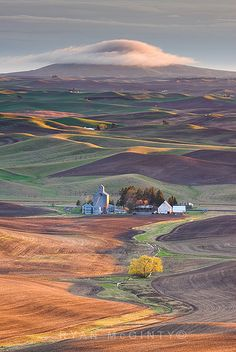 Palouse, Washington. No more beautiful place in the world than the rolling hills of the Palouse.  Fantástico!!!!